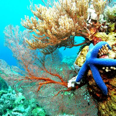 Indonesia, Flores, snorkeling: